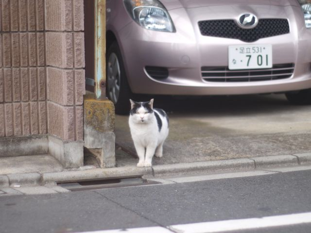 猫との遭遇(朝)