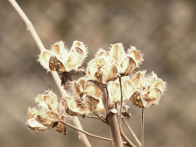 冬枯れ草2