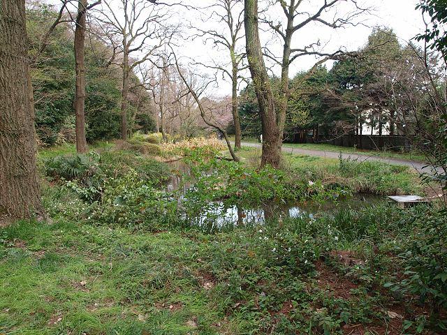 小石川植物園1
