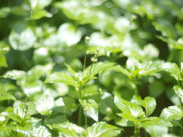 小石川植物園2-9