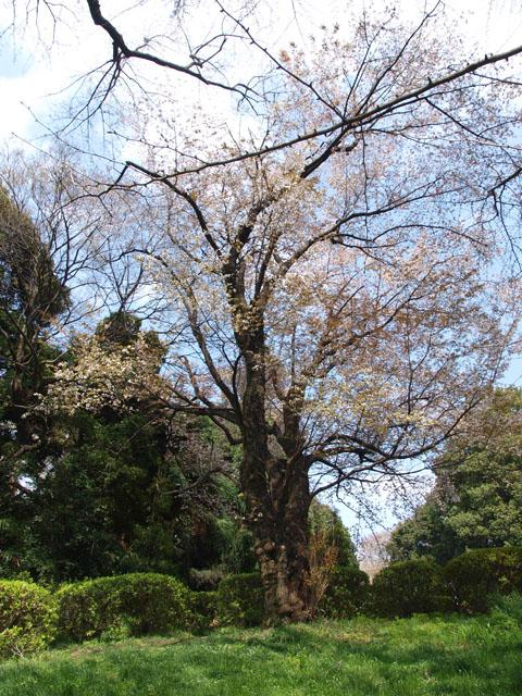 小石川植物園2-6