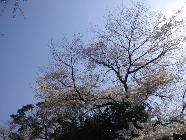 小石川植物園2-7