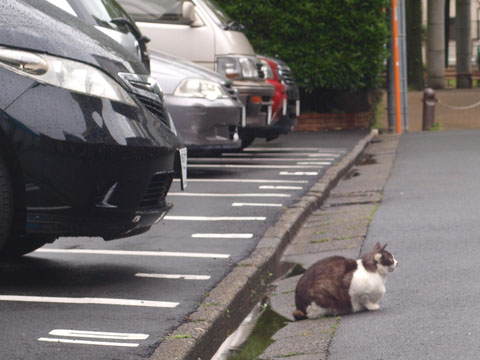 駐車しそこねた