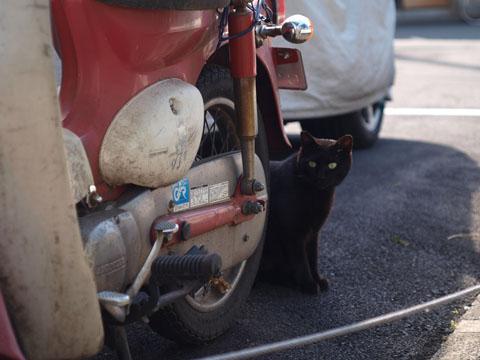 黒猫と挨拶
