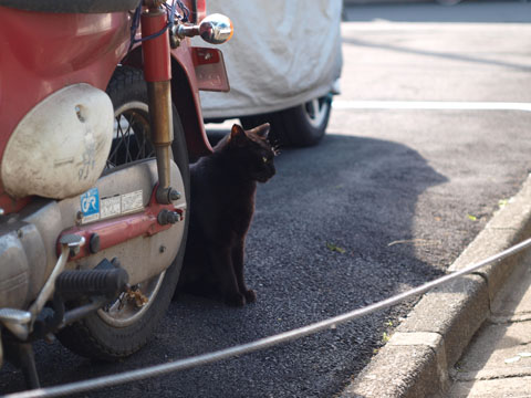警戒黒猫 りりしいなぁ
