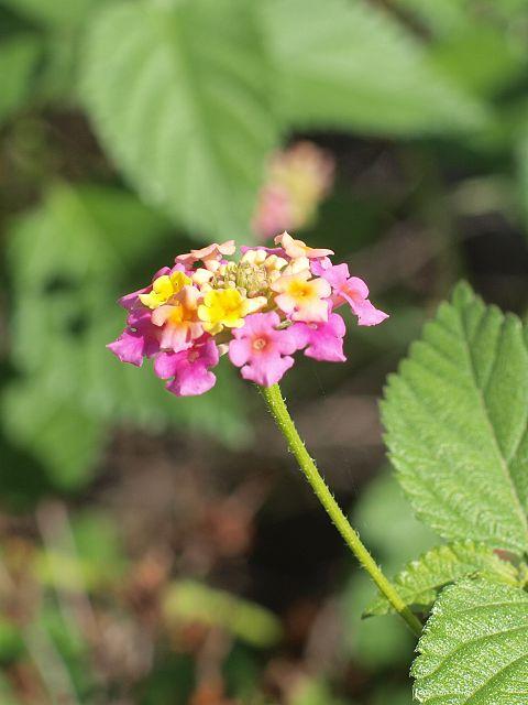 綺麗な小さなお花