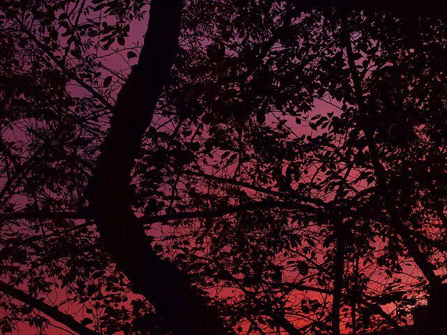 夕焼け影絵