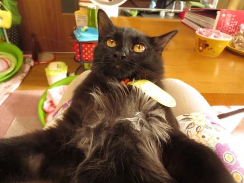 cat_43792_1.jpg