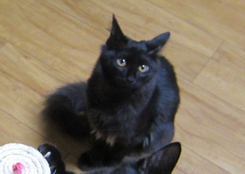 cat_43793_1.jpg