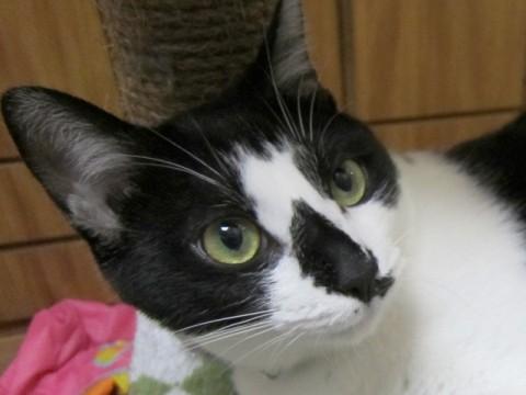 cat_43856_1.jpg