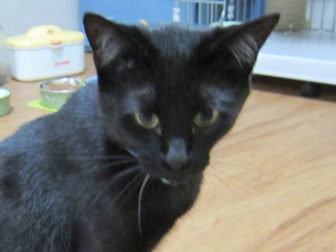 cat_44004_1.jpg