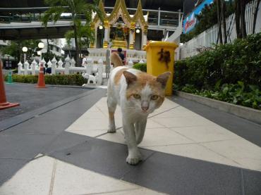 バンコク猫2