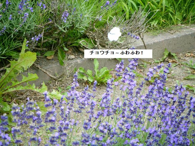 008_20110724142217.jpg