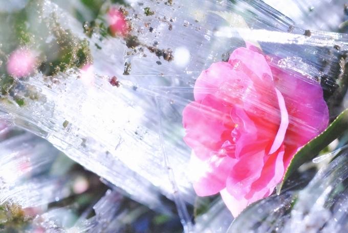 1_1_2011_05.jpg