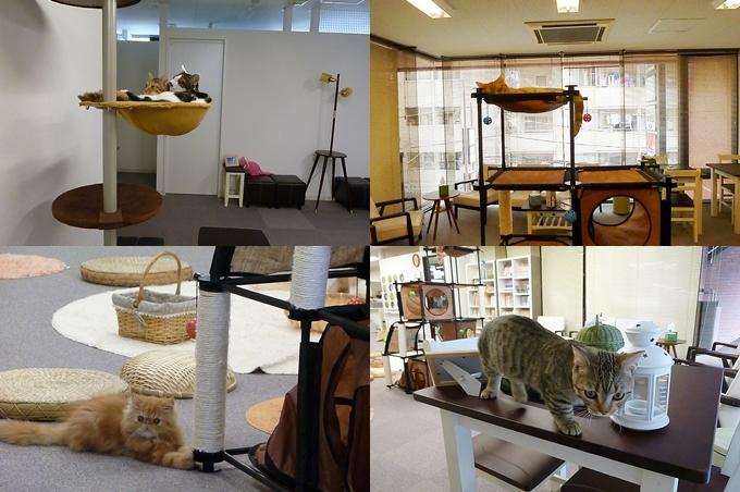 猫まるカフェ_1