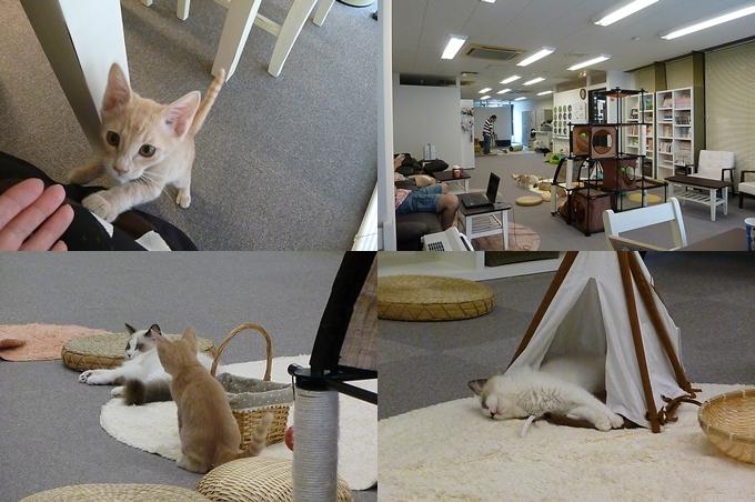 猫まるカフェ_2