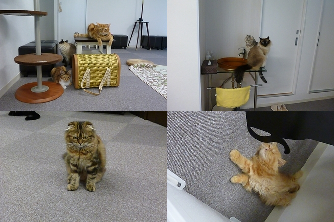 猫まるカフェ_3