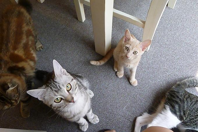 猫まる_12