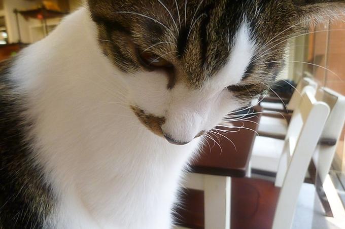 猫まる_14