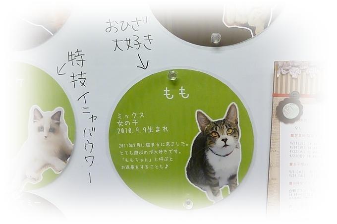 猫まるEast_01