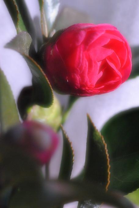 2011_01_22_3.jpg