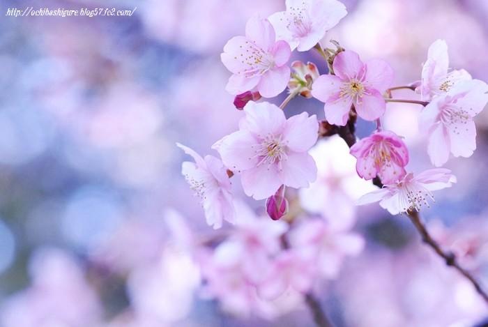 2011_03_13_01.jpg