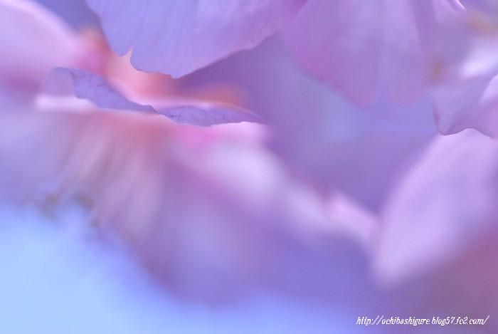 2011_03_13_08.jpg