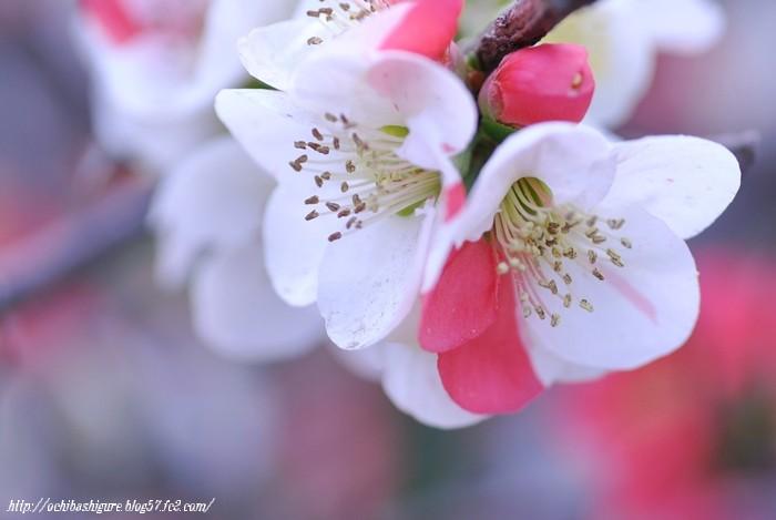 2011_04_16_06.jpg