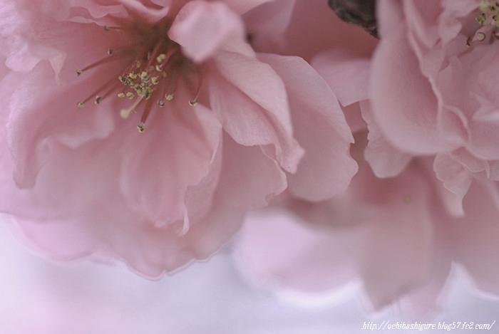 2011_05_05_03.jpg