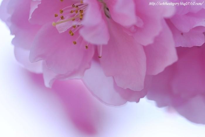 2011_05_05_1.jpg
