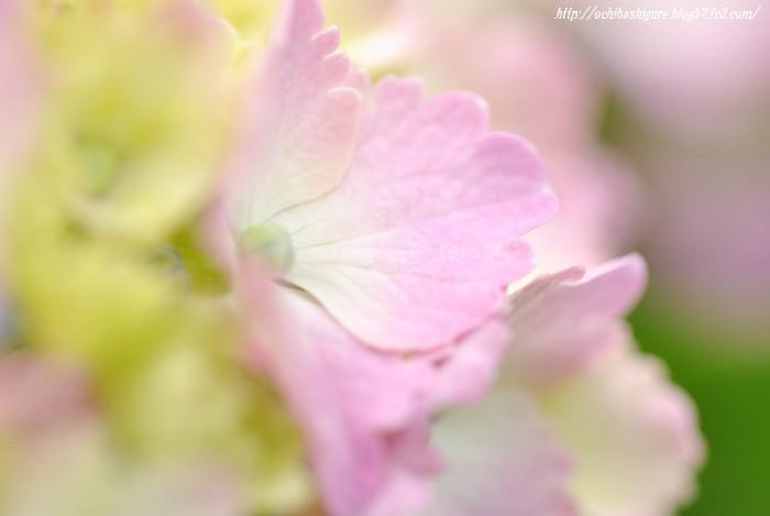 2011_06_18_05.jpg