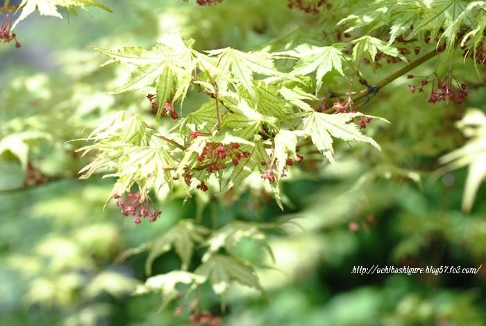2011_07_02_00.jpg