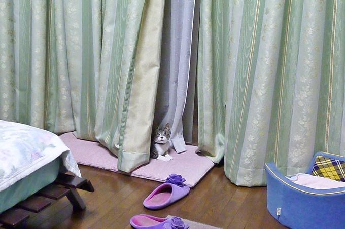 2011_07_02_01.jpg