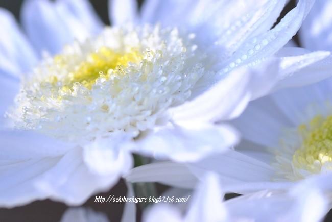 2011_11_12_01.jpg
