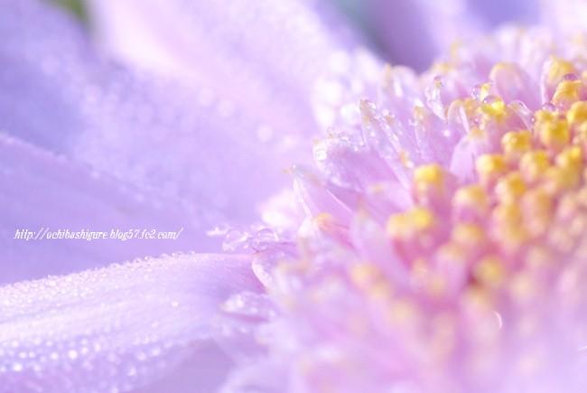 2011_11_12_05.jpg