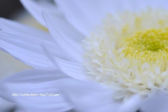 2011_11_20_01.jpg