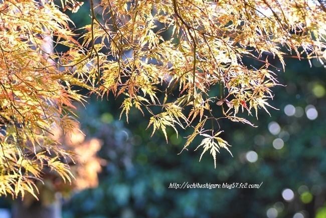 2011_11_23_01.jpg