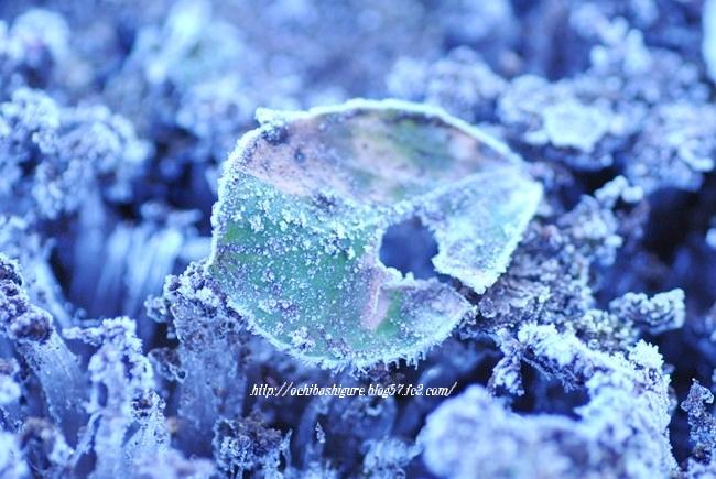 2011_12_17_01.jpg