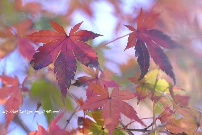 2011_12_31_09.jpg
