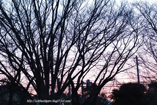 2012_01_28_01.jpg