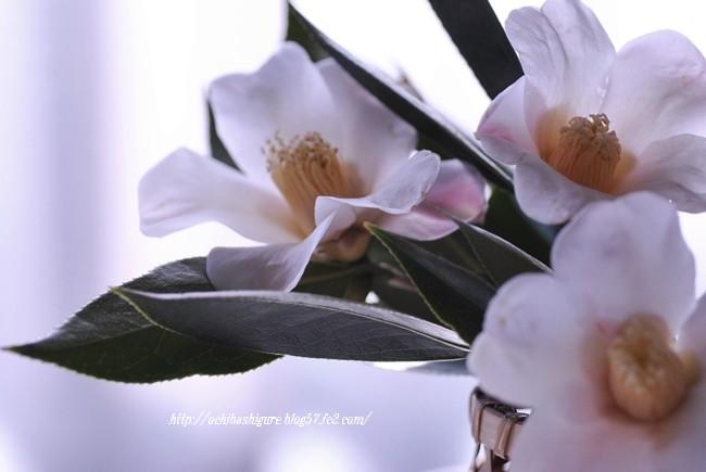 2012_02_04_01.jpg