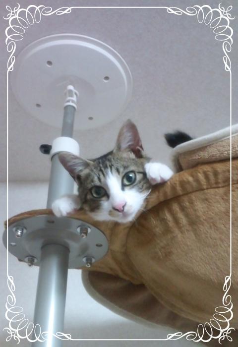 Kohaku_04_09_2011.jpg