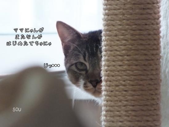 1_20130130073209.jpg