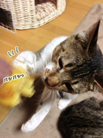 4_20121227231917.jpg