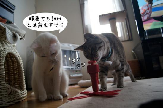 5_20130115081034.jpg