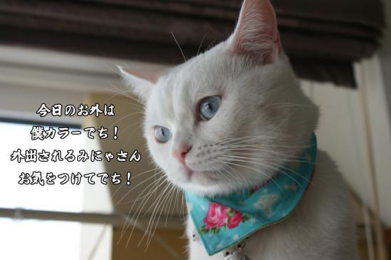 5_20130309080151.jpg