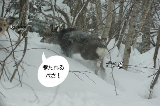 6_20130303080001.jpg