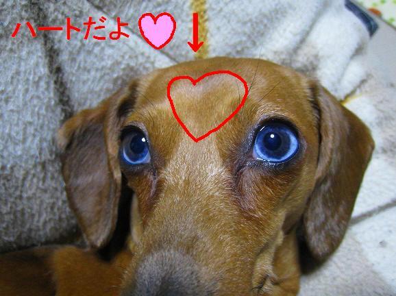 LOVE♪