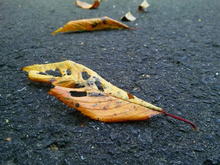 秋だね~♪