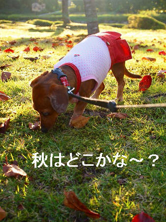 秋を探して・・・
